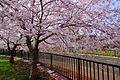 旧軽川 (Old Garu River) - panoramio.jpg