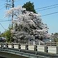 明日香村にて 甘樫橋 2012.4.12 - panoramio.jpg
