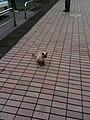 高知県高岡郡中土佐町 - panoramio (11).jpg