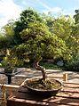 028 Balboa Park Japanese Garden.JPG
