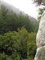 050 Bosc a la serra Pigota, des del castell de Lillet.jpg