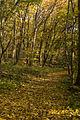 15-11-01-Kaninchenwerder-RalfR-WMA 3297.jpg
