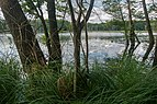 17-07-21-Heiliger See Sandkrug-DSCF6052.jpg
