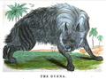 1841 hyena MerrysMuseum v2 no3.png