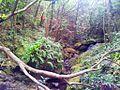 1 Vallee Ferney indigenous forest c.jpg
