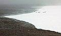 2007 Snow-Hill-Island Luyten-De-Hauwere-Emperor-Penguin-51.jpg
