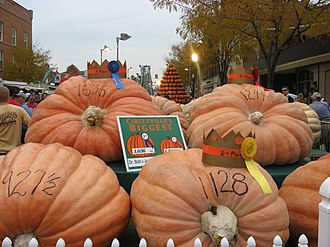 Circleville Pumpkin Show - 2009 champion pumpkins, with their weights in pounds written on them