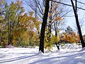 2011-10-30 06-Trees on Linvale Road in East Amwell, Hunterdon County, New Jersey after 6 to 7 inches of snow fell the previous day during the 2011 Halloween nor'easter.jpg