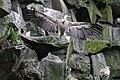 2012-09-15 Tierpark Berlin 48.jpg