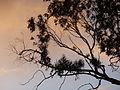 2013-12-28 Pôr-do-sol em Colares.JPG