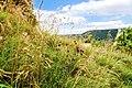 2016-07-16-Gerhausen-68.jpg