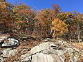 2016-10-25 12 43 22 Rocky outcrop and trees displaying autumn foliage at the Little Devils Stairs Overlook along Shenandoah National Park's Skyline Drive in Rappahannock County, Virginia.jpg
