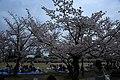 20160403 Himeji-Castle 3275 (26732320612).jpg