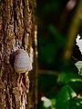 2018-09-09 15-13-05 - Snail Bokeh - Schmalensee - Schleswig-Holstein - Deutschland - Flickr - torstenbehrens.jpg