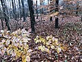 2020-12-12-Hike-to-Rheydt-Palace-and-its-surroundings.-Foto-31.jpg