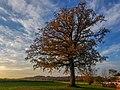 20201031 1622 Dorfbäume in Untereschlbach.jpg