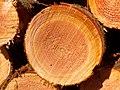 2021-02-20 11-09-03 forêt.jpg