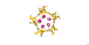 Shiga-like toxin - Image: 2XSC.pdb