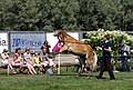 421-Finnhorse-filly-01.jpg