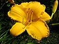4519 - Bern - Rosengarten - Flower.JPG