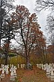 46-253-5010 Oak RB 18.jpg