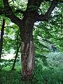 617683 A 683 Krakow Krzesławice Wankowicza 25 park w zespole dworsko parkowym 39.JPG