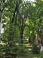 73-101-5008 Група різновидностей рідкісних дерев.jpg