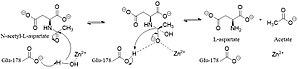Aspartoacylase - Image: ASPA mechanism