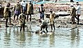 A Body is being retrieved after few days of ordeal at Nagapattinam on January 02, 2005.jpg