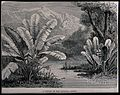 A stream in the savanna region. Wood engraving, c. 1867. Wellcome V0043195.jpg