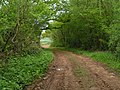 A track through woods to a field - geograph.org.uk - 1304450.jpg