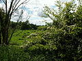 A view west across meadow from north of village, Belton (nr Grantham).jpg