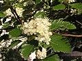 Ab plant 1734.jpg