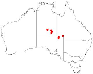 <i>Acacia pickardii</i> Species of plant