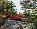 Acadia National Park (dae8f41f-ecf8-43f3-82f0-e37ae57ed326).jpg