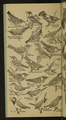 Accompany Manual of Bird Study-0006-scan.png