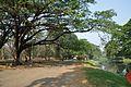 Acharya Jagadish Chandra Bose Indian Botanic Garden - Howrah 2011-01-08 9755.JPG