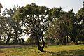 Acharya Jagadish Chandra Bose Indian Botanic Garden - Howrah 2011-01-08 9811.JPG