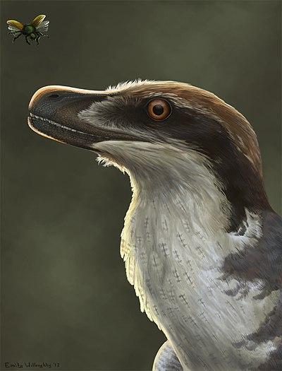 Acheroraptor reconstruction.jpg