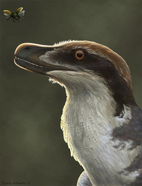 File:Acheroraptor reconstruction.jpg