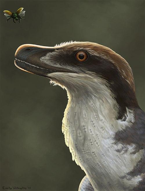 Acheroraptor