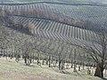Acqui Terme (Piemonte, Italy) (11675289425).jpg