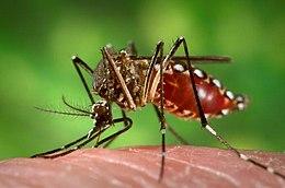 Tájékoztatás ismételt földi szúnyoggyérítésről