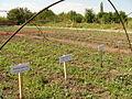 Agriculture in Armenia 001.JPG