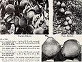 Aiken's 1953 garden book (1953) (17761792459).jpg