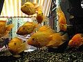 Akvarijní ryby.jpg