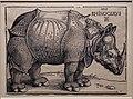 Albrecht dürer, rinoceronte, 1515.jpg