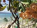 Alibijaban Island, San Andres, Quezon Province, Philippines (13).jpg