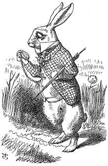 Coelho Branco Wikipédia A Enciclopédia Livre