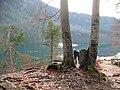 Alpsee im Gegenlicht - panoramio.jpg
